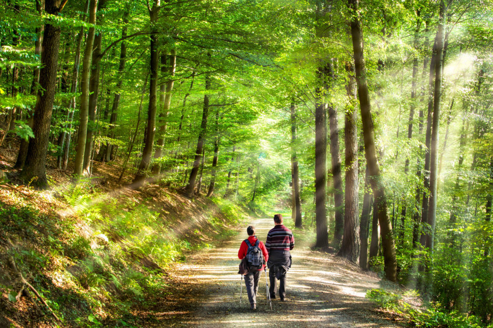 2 people walking on a path in the middle of a forest
